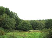 Hargate Forest