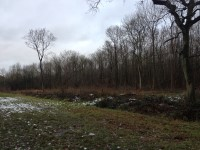 Brampton Woods Nature Reserve