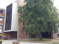 Allam Building