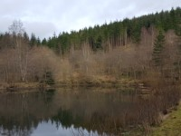 Tweed Valley Forest Park - Glentress Ponds Trail