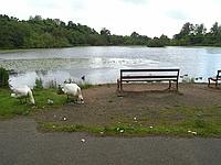 Kilmardinny Loch