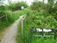 Ripple Nature Reserve