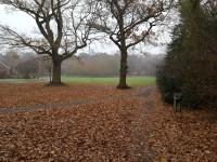 Dorridge Park and Dorridge Wood
