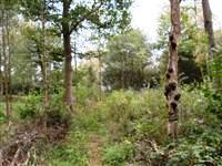 Millison's Local Nature Reserve